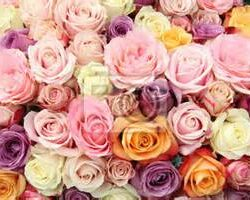 pastel bloemen